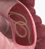Pode fazer exame de fezes menstruada