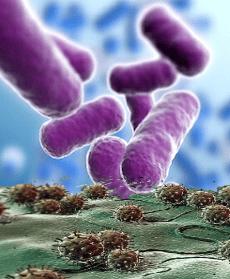 bactéria vírus hiv