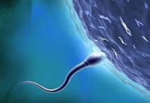 esperma-imagem