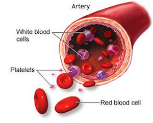 anticorpos anti plaquetas