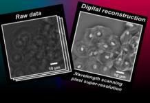 nova técnica em microscopia