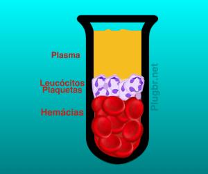 tubo sangue leucocitos hemacias plasma