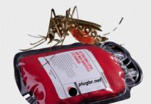 transfusão de sangue e o zika vírus