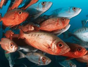 peixes na alimentação